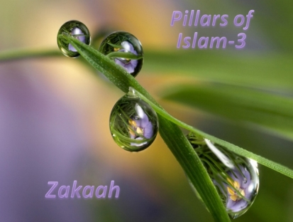 Zakaah-ages 7-8