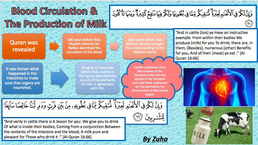 Quran And Science Blood Circulation And Production Of Milk