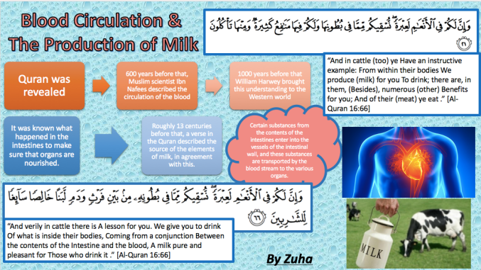 Blood circulationproduction of milk poster-Zuha