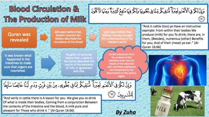 Blood circulationproduction of milk poster-Zuha